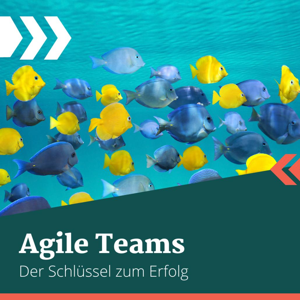 Agile Teams sind beweglich